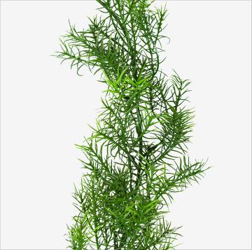 Reel Weeds :: 6' Reel Weeds™ for Ponds